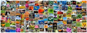 albume de poze