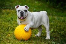 adoptie câine